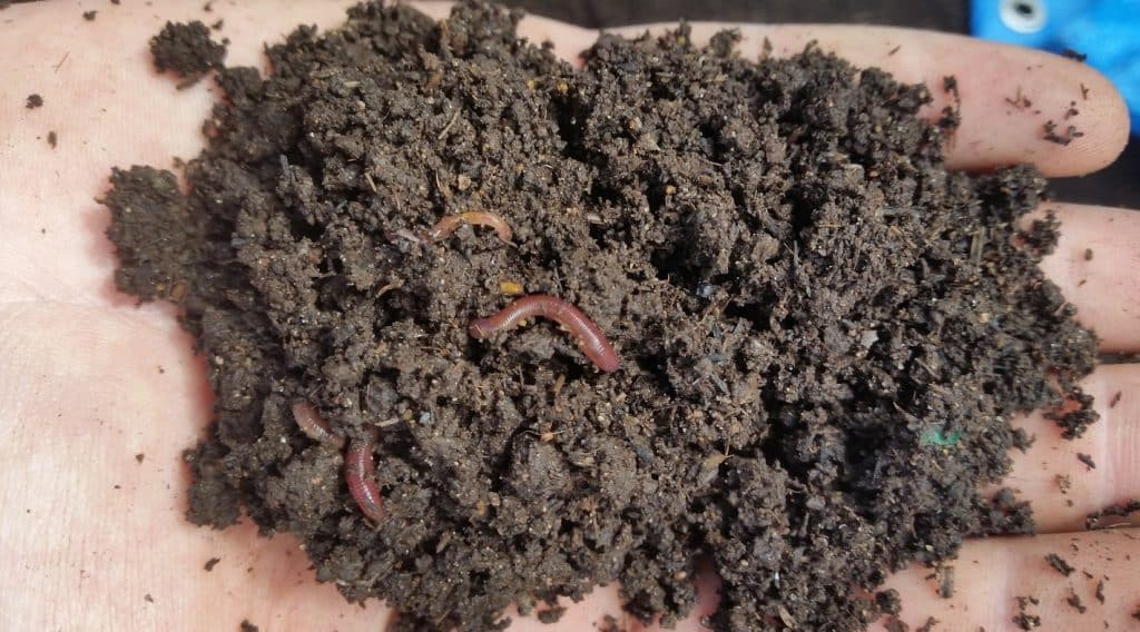 worm casting for cannabis soil
