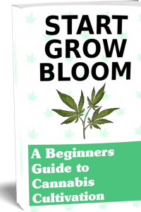Grow Cannabis Guide