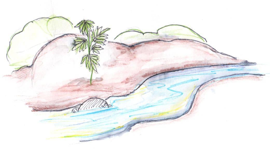 Planter du cannabis près d'un ruisseau