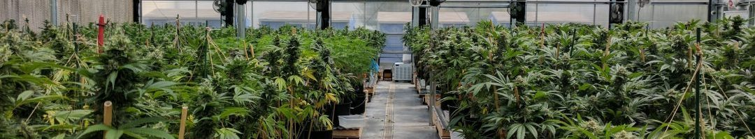 Commercial_Cannabis_Greenhouse_Facility