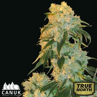 Northern Lights-canuk_2