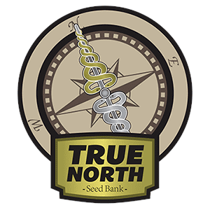 Graines de cannabis True North